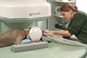 сделать МРТ собаке