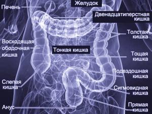МРТ диагностика кишечника