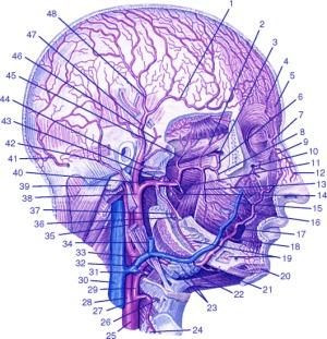 томография головы