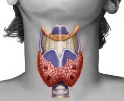 МРТ щитовидной железы цена диагностики