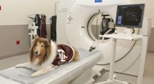 МРТ для животных в Москве