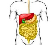 Компьютерная томография желудка